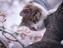 Sweet cat in a blossom tree - HD wallpaper