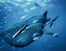Big fish in the water - See animals wallpapers