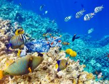 Wonderful and magic life under water - Colorful fish