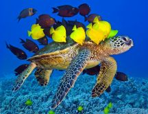 Big bus turtle for beautiful color fishes - Life under water