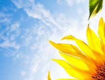 Yellow sunflowers petals in the wind - HD wallpaper