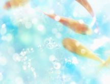 Blue sky and blue summer abstract wallpaper - Sunny day
