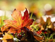 Autumn leaf in the warm sunlight - HD wonderful season
