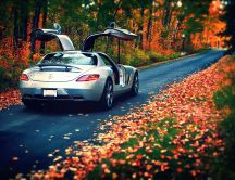 Wonderful Mercedes car luxury - Autumn leaves on the road
