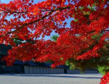 Red tree from Japan - Beautiful wonderful Autumn day