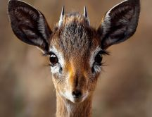 Wonderful macro photo with a small wild animal - Deer