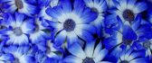 Wonderful blue flowers on whole desktop - HD spring season