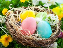 Colorful Easter eggs in a bird's nest - Happy Holiday