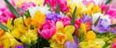 Welcome beautiful spring season full with colorful flowers