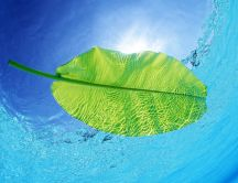 Green leaf in the pool water - blue summer sky