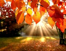 Sunlight on Autumn season - Beautiful sunny day in park