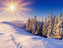 Warm Winter sunny day - Wonderful shiny white snow