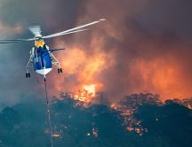 Helicopter rescue people and animals from Australia fire