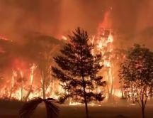 All forest in Australia are burning - Earth disaster fire