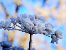 Wonderful frozen tree - Macro ice wallpaper