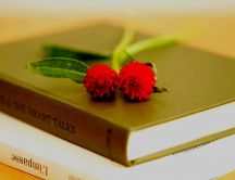 Two red flowers on books - Time for studying