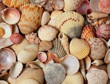 Shells carpet - Wonderful by ocean and nature
