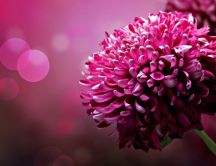Wonderful 3D dark pink flower - Beautiful nature photo
