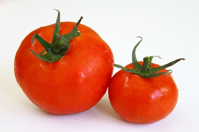Download Wallpaper Fresh Tomatoes