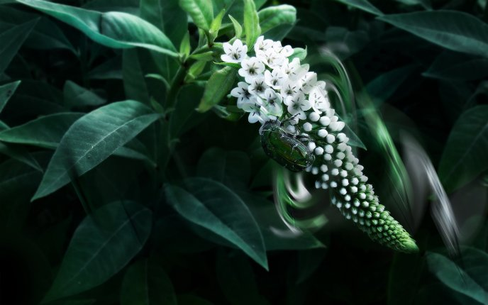 A green insect on a white flower