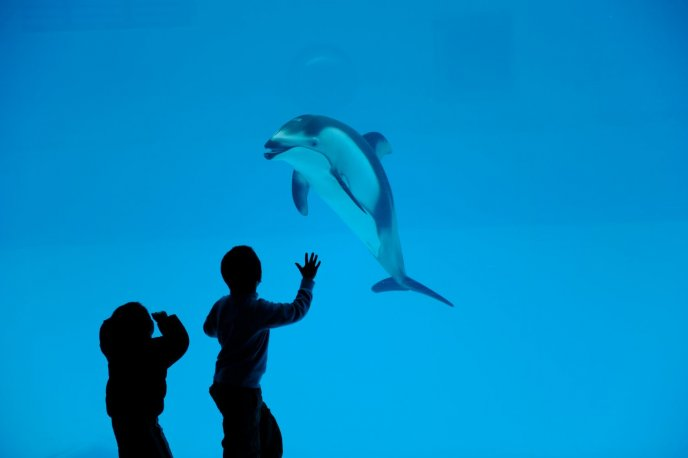 Download Wallpaper Children at Water Park - dolphin