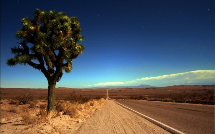 Lone Joshua tree in the desert