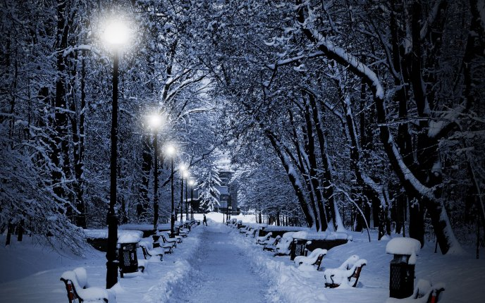 White lights illuminate the snowy park alley