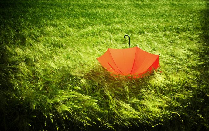 An orange umbrella in the middle of a green field