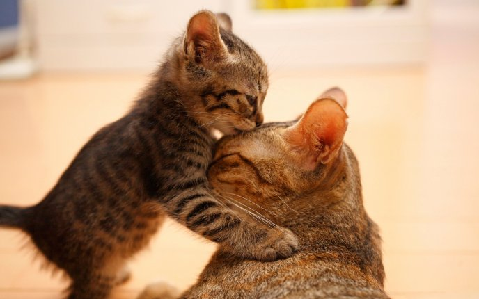 I love my mother - baby kissing its mother