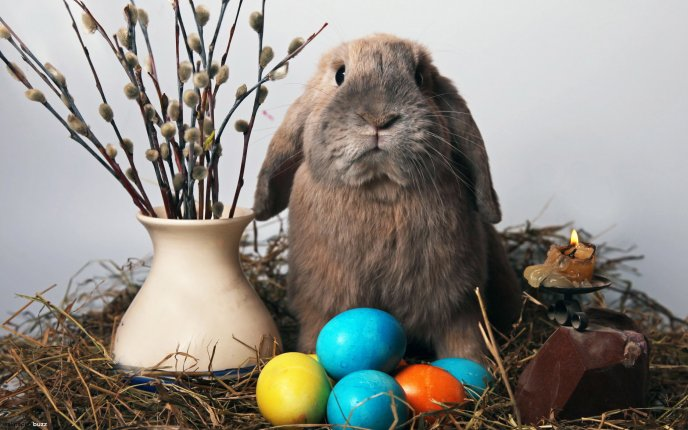 Sad bunny that looks after Easter eggs