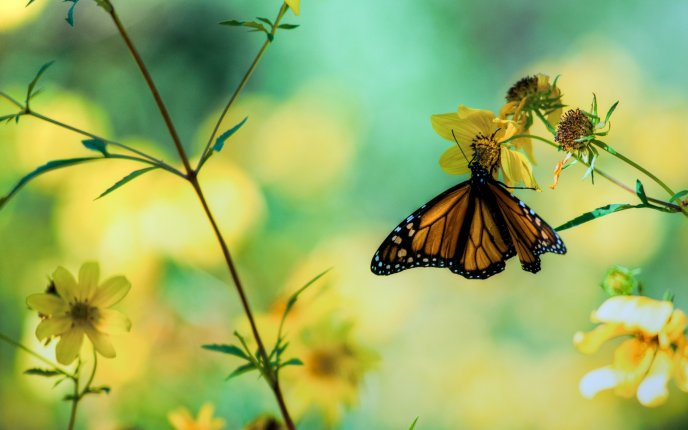 A butterfly hanging from a yellow flower - spring wallpaper