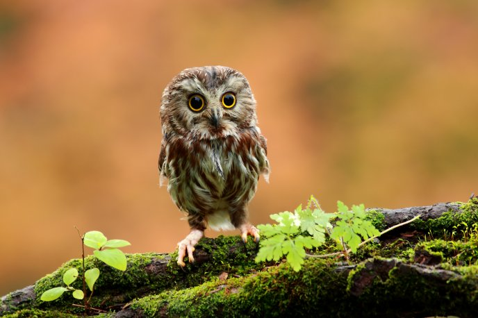 A baby owl sitting on a mound of moss ground