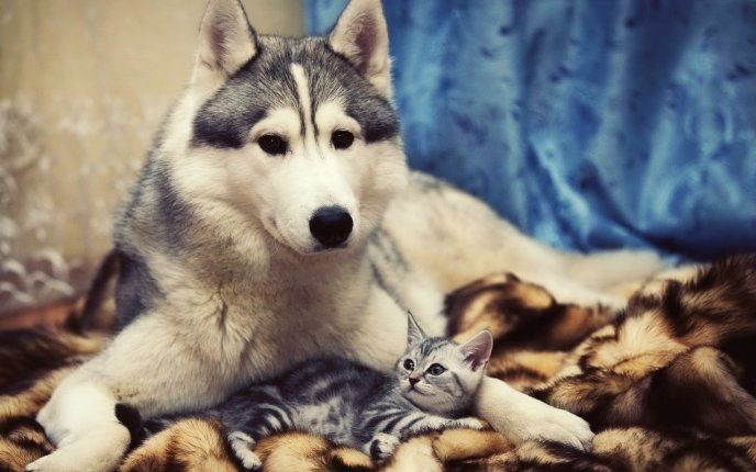 Two friends - a dog and a cat