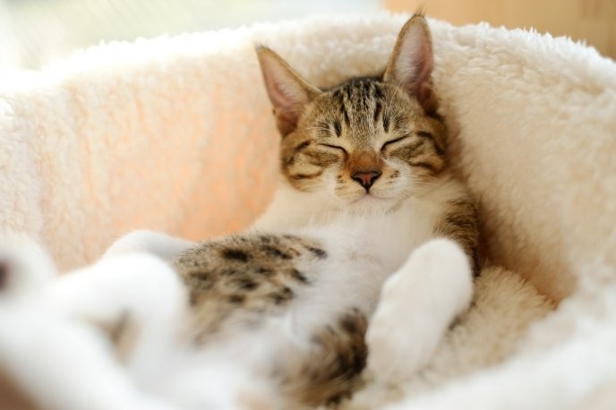 Sleep is the best relaxation - sleepy cat
