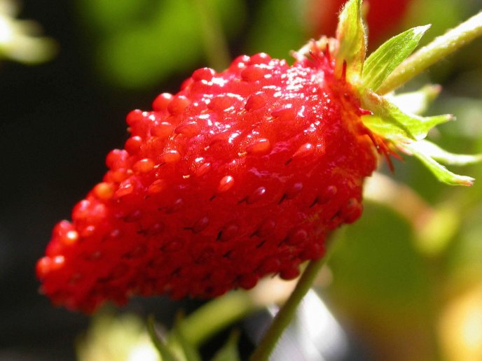 Delicious red strawberry - macro HD wallpaper