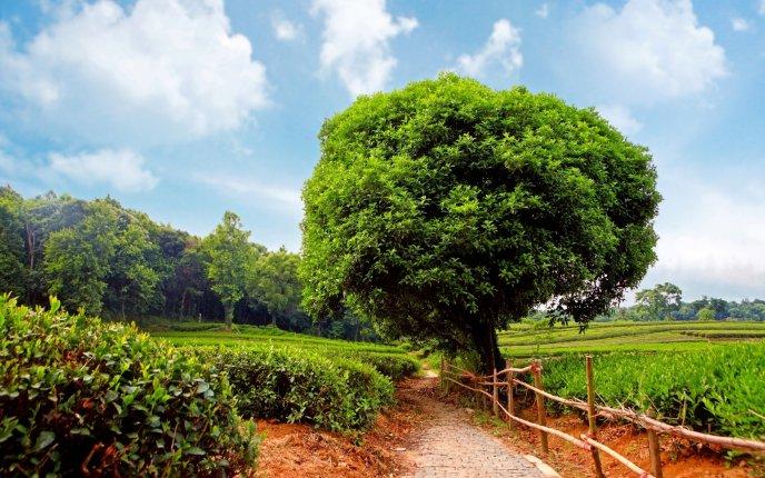 Download Wallpaper Big Green Tree