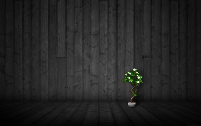 A small tree blooming in a pot HD wallpaper