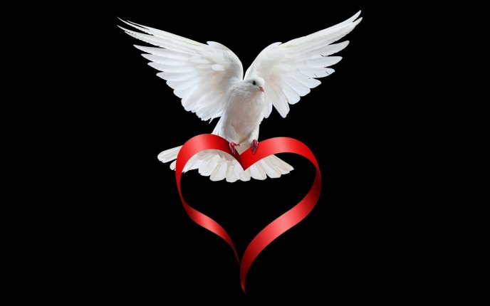 Dove of peace - love is everywhere