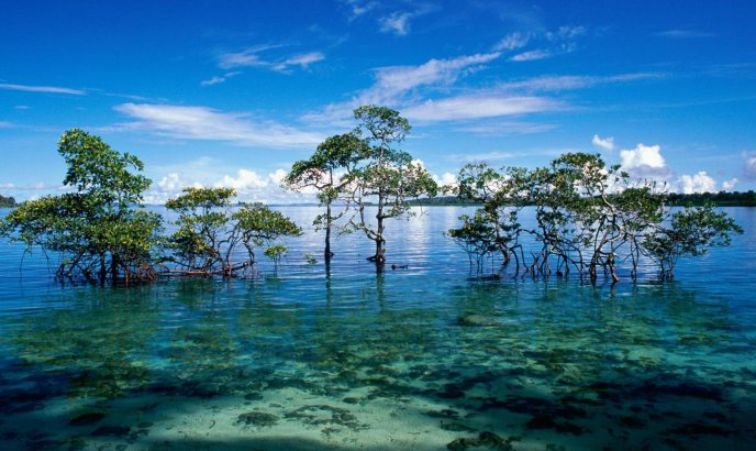 Water trees beautiful hd landscape