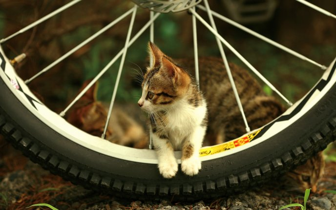 Little kitty sitting on the bicycle wheel