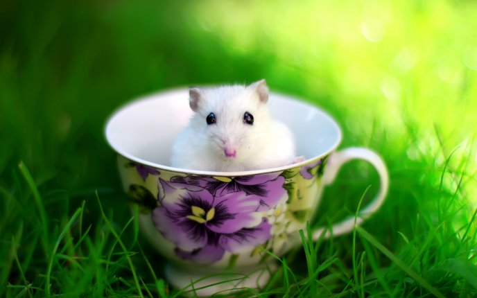 Little white mouse in a cup of coffee - HD wallpaper