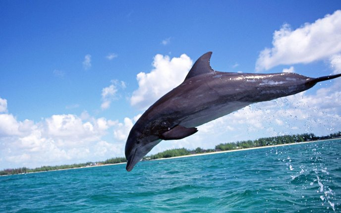 A beautiful bounce of a dolphin - HD wallpaper