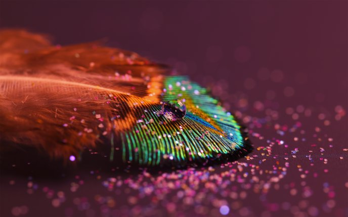 A drop of water on a colorful feather - Macro HD wallpaper