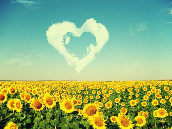 5680_Sunflowers-love-the-sun-HD-nature-wallpaper.jpg