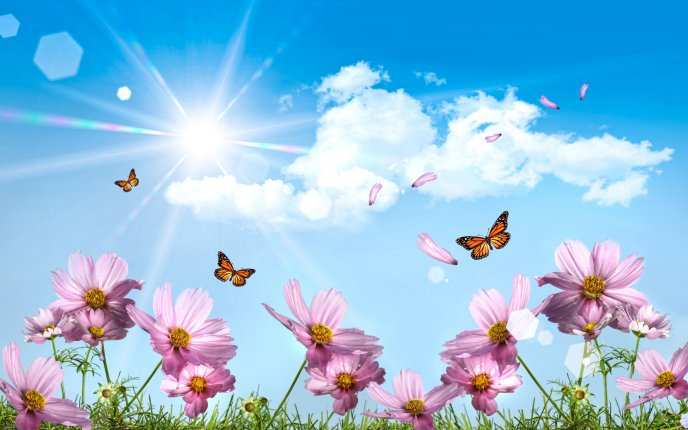 Pink flowers and beautiful butterflies in sunlight