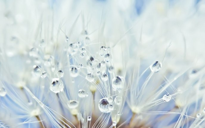 Early morning dew drops - beautiful white flowers