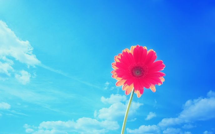 Pink flower in the bright of sun - summer HD wallpaper