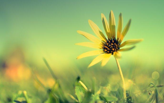 Download Wallpaper Beautiful Yellow Flower In The Sunlight