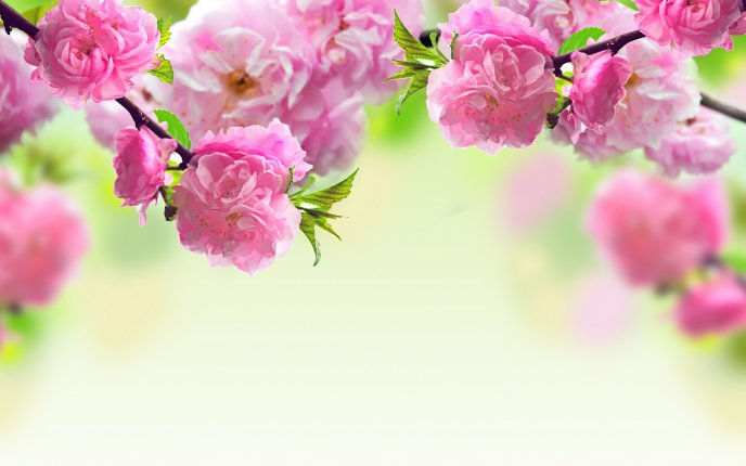 Spring flowers blooming tree painting mightylinksfo