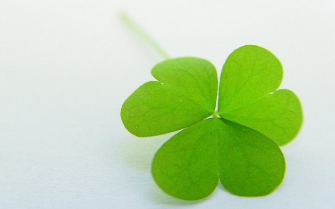 Heart leaves on a lucky clover - HD nature wallpaper